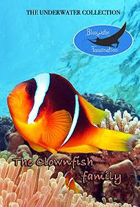 clownfishfamily