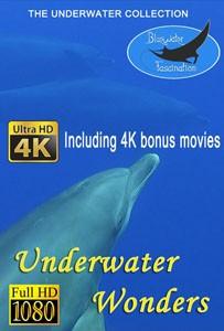 underwater wonders_bluewaterfascination