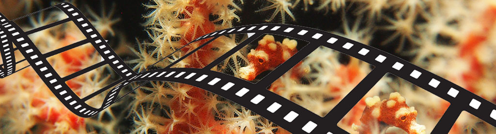 New Movies and Stock Footage
