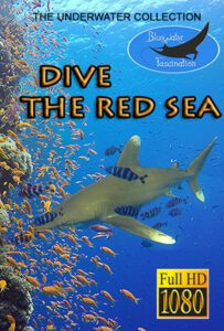 Underwater film Dive The Red Sea HD for sale