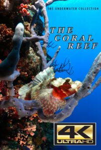Bluewaterfascination underwater film The Coral Reef 4K for sale