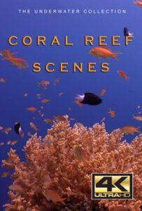Bluewaterfascination underwater film Coral Reef Scenes 4K for sale