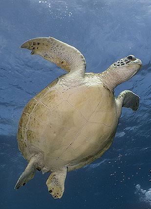 Royalty free stock footage turtles