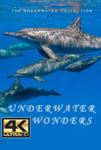 Bluewaterfascination underwater film underwater Wonders 4K for sale